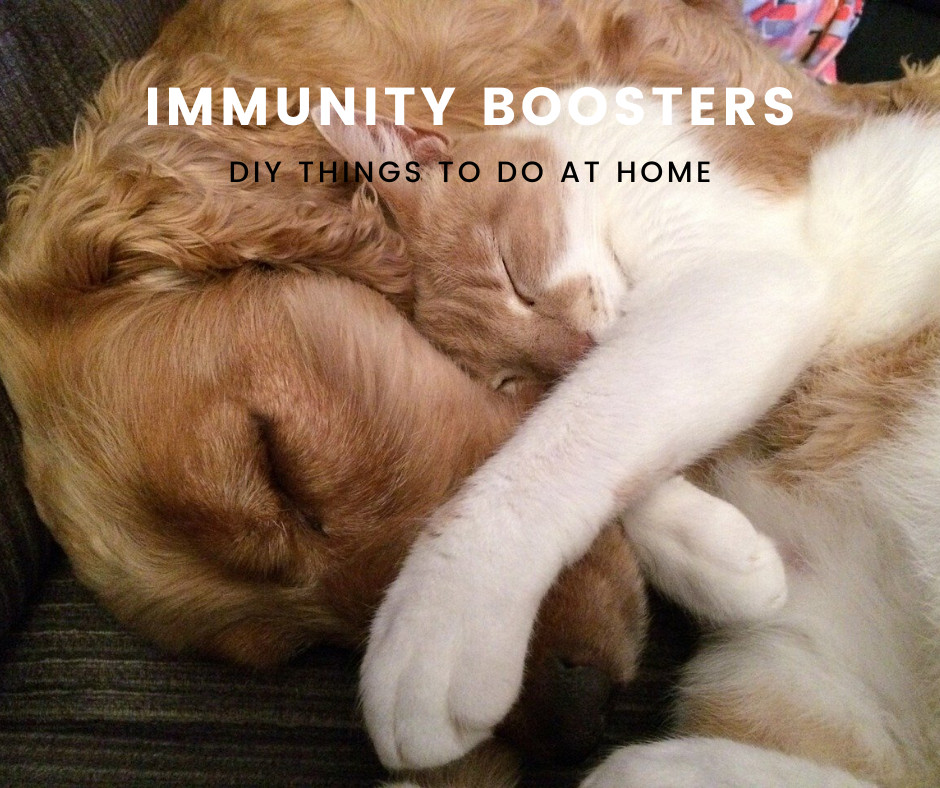 Immunity Boosters for Pets