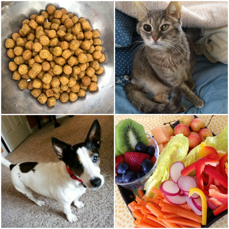 Pet Immune Support Tips