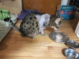 https://nutrition.tripawds.com/2020/07/27/cat-or-dog-wont-eat/