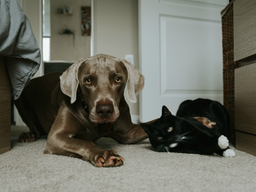 dog and cat food climate change