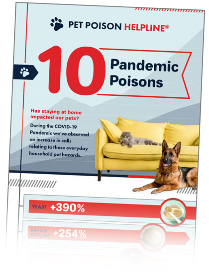 pandemic pet poisons