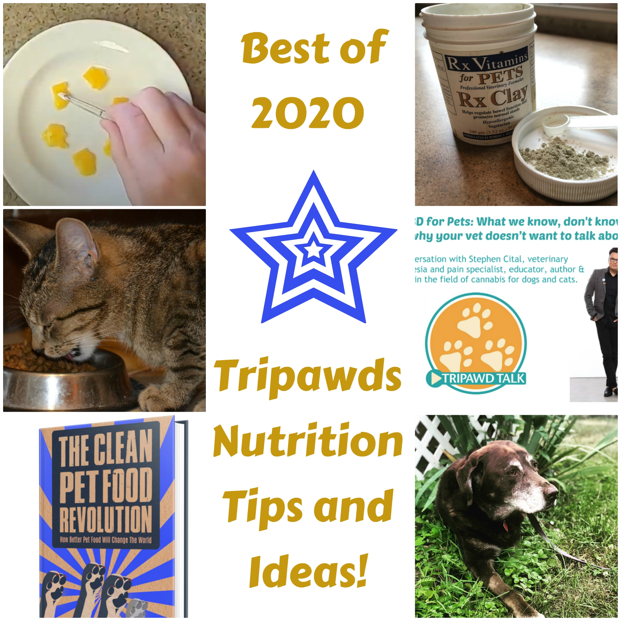 best Tripawds nutrition tips