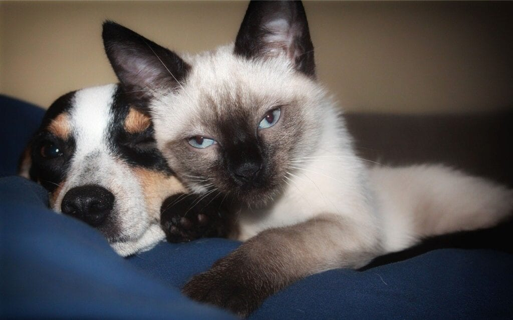 dog and cat sharing CBD