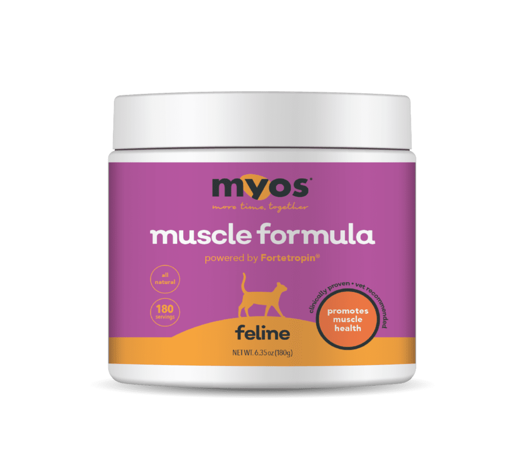 muscle building formula for cats