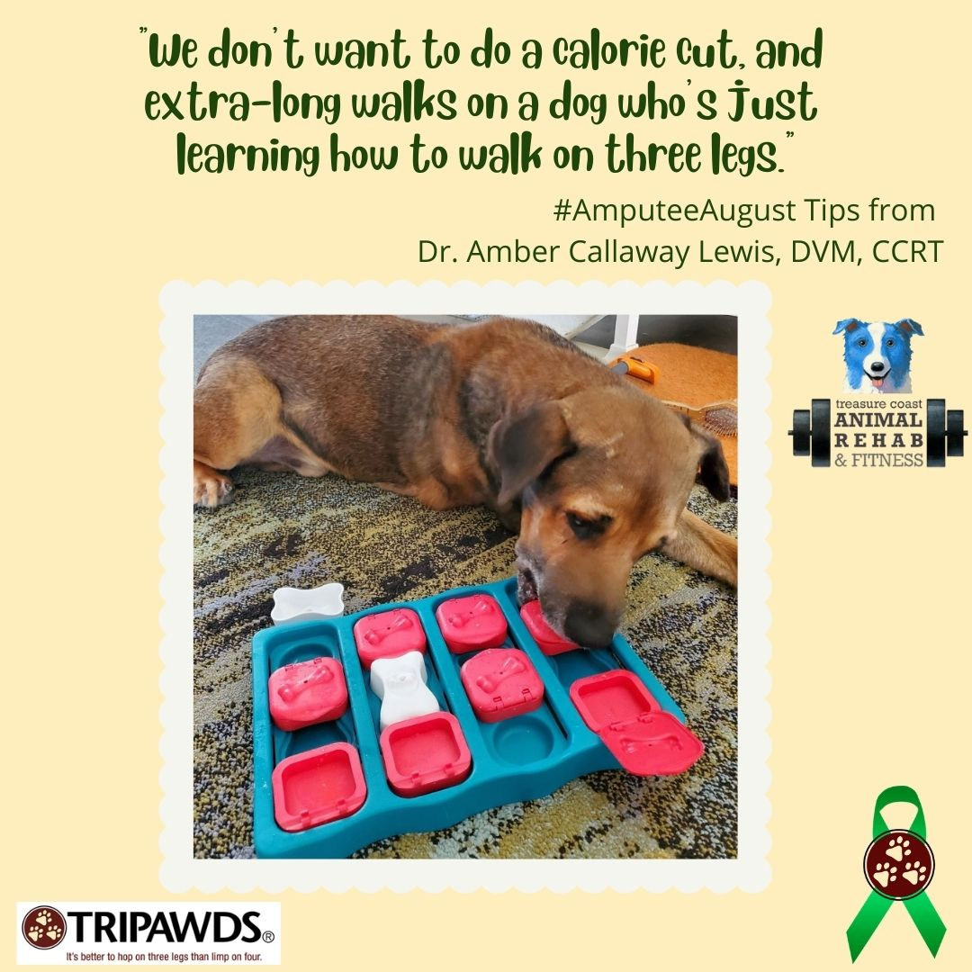 eating and exercise tips for Tripawds