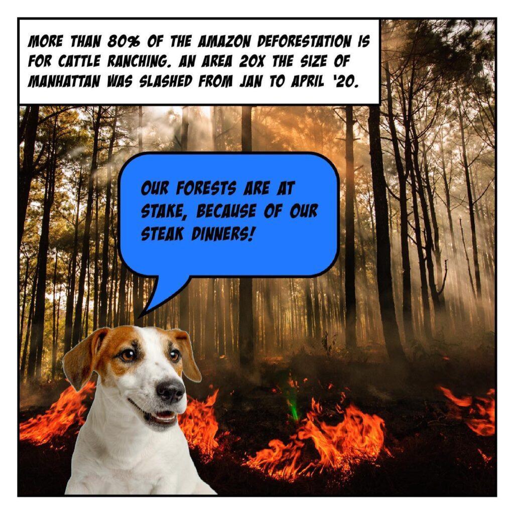 carbon pawprint dog food damage